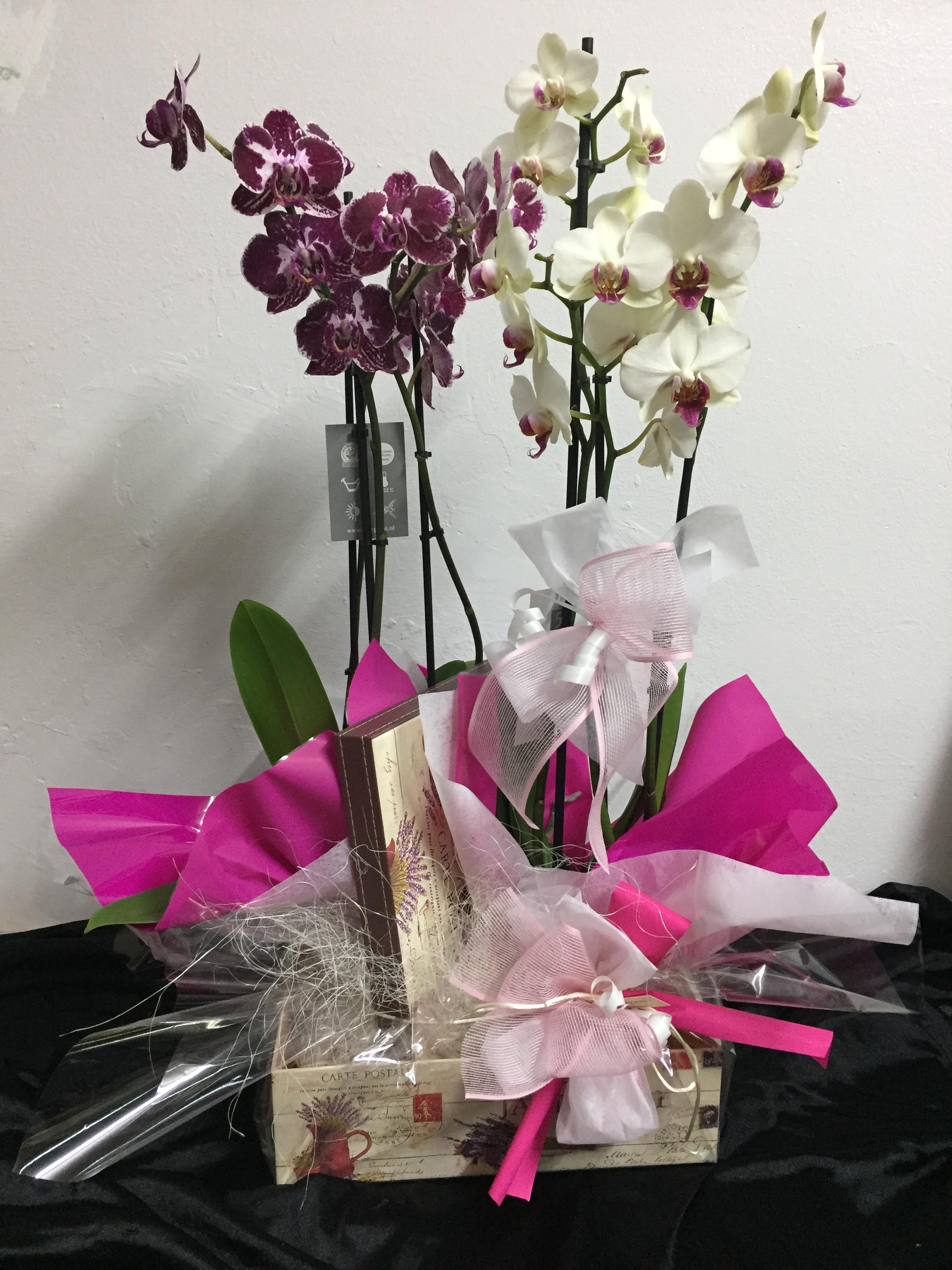 Centro De Orquídea Phalenopsis