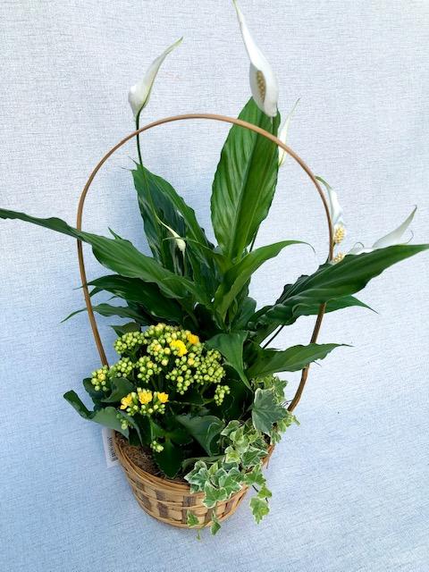 Verde Primavera (cesta Con Asa)
