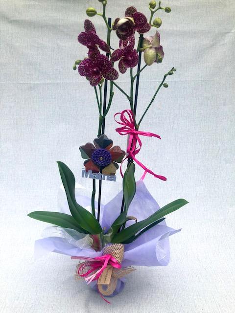 """Orquídea Lila Matizada  (con Detalle """"mama"""")"""