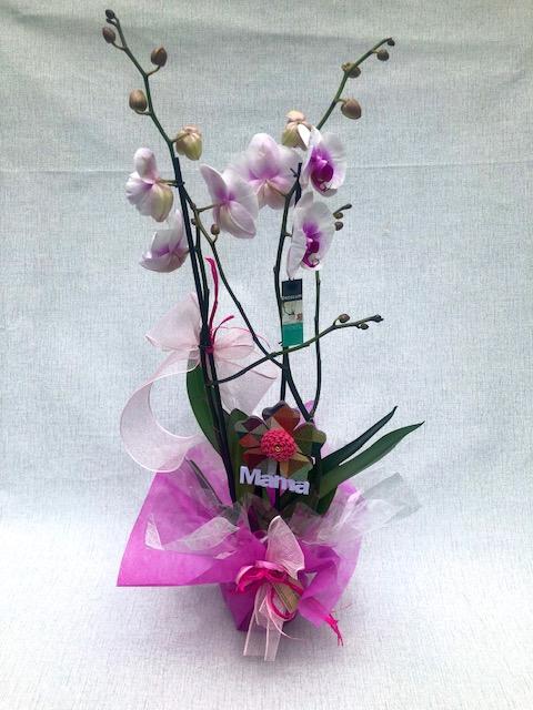"""Orquídea Blanca Y Violeta (con Detalle """"mama"""")"""