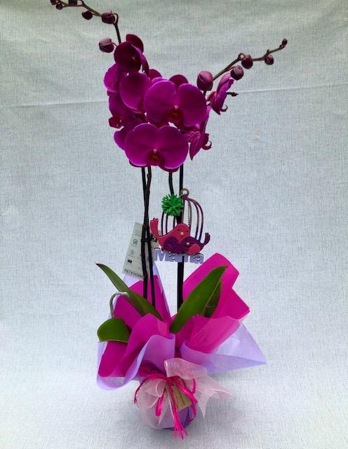 """Orquídea Lila (con Detalle""""mama"""")"""