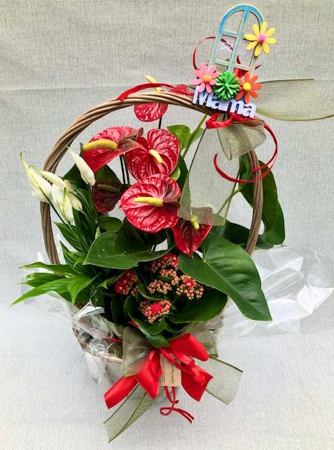 Surtido Especial De Plantas (cesta Con Asa)